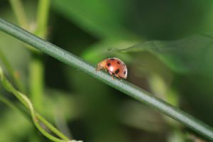 beetle crawlin on a green stem by fantanicity