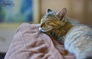 the tired little kitty by miades
