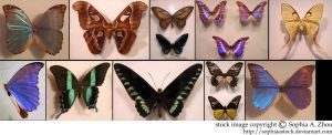 stock pack: Butterfly wings by sophiaastock