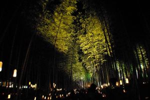 Bamboo Fairy Forest by taeliac