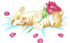 Little kitty and a red rose... by Zero-White-tiger