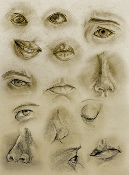 face parts study by verachime
