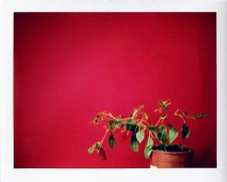 Red Pepper by aoife