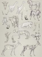 Animal Anatomy Studies by LaiaAmela