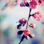 Afternoon delight by nhuthanh