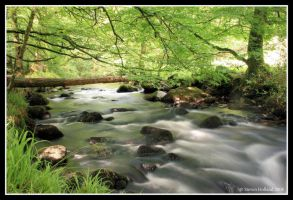 Golitha Falls by Kernow-Photography
