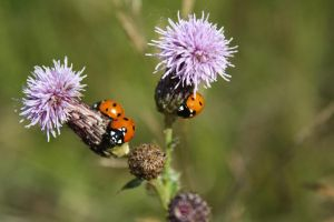 Meeting of the ladybugs by Cia81