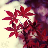 Dark red by Stefania-R