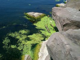 Moss and seaweed by Maddmatthias247