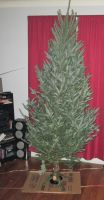 First real christmas tree before decorating by catsvsfox