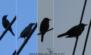 Avian _ Bird 20140329 unknown compilation by K4nK4n