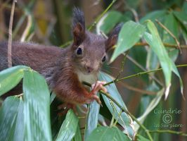Squirrel 182 by Cundrie-la-Surziere
