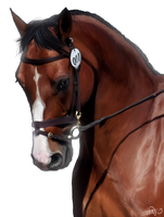 Horse portrait by S1ghtly