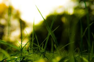 Grass World by kbeekay