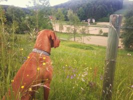 He watches the cows by MasterTeska