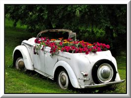 White flower box... by Yancis