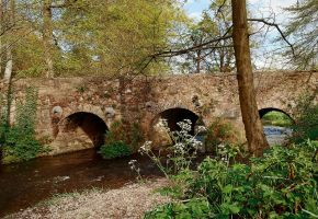 Minnowburn Beeches in April by Gerard1972