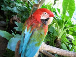 Beautiful Parrot by Detrucci