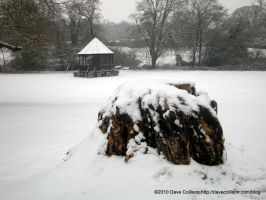 Tree stump and bandstand by TheBigDaveC