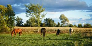 Horselife landscape 5 by Renalon