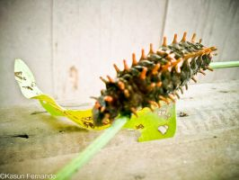 Caterpiller the Baby Buterfly2 by MickeyTheSaviour
