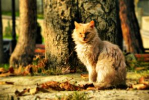Cat from Autumn by Svargedorath