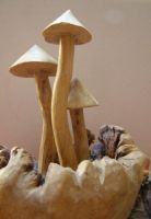wooden mushrooms... by chop-stock