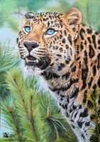 Amur spirit by Azany