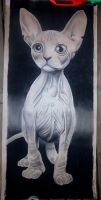 charcoal cat by tigon