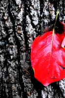 red leaf and bark. by StillSouthern