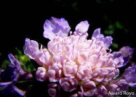 Flower light by Alvarofi