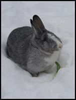 Snow bunny by Sophie1990