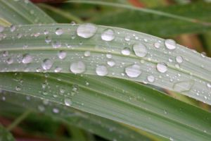 Water Droplets by SmellsLikeDookie