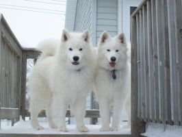 Snow Dogs by whoapony