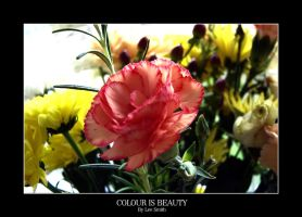 Beauty is colour by lmsmith