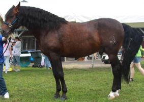 Handsome Stud Stock 2 by Lovely-DreamCatcher