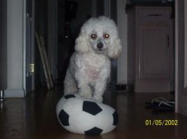 airbud by csoccerchic101