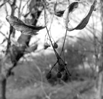 Seeds by Baltagalvis