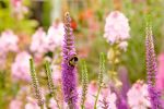 Bee and flowers - Linlithgow by wildplaces