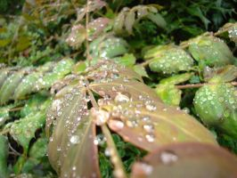 Rain Drops on Leaves 06 by Tech-Dave
