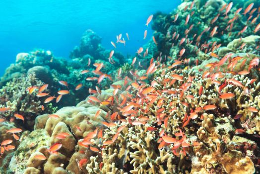Coral reef by MotHaiBaPhoto