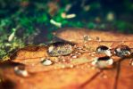 Drop reflexions by JoaoPhotography
