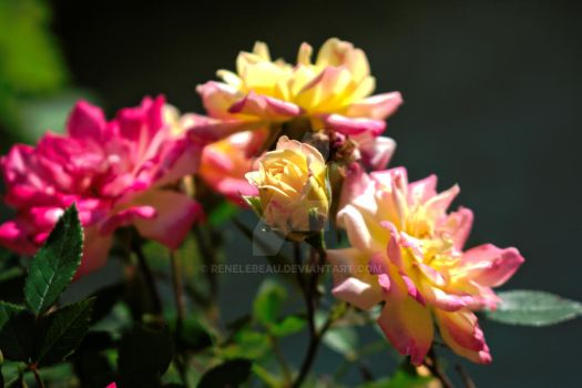 Pink and Yellow Flowers by ReneLeBeau