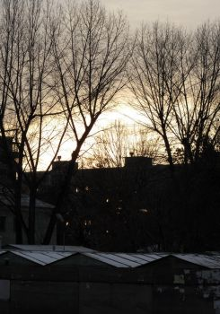 trees and houses by SuRfik