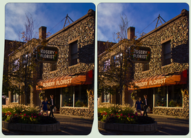 Rosery Florist of Sudbury : CrossEye3D Stereoscopy by zour
