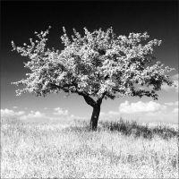Spring Tree by Osiris81