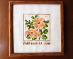 Wild rose of June by Electra-Maia