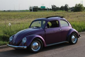 Lilac Bug by KyleAndTheClassics