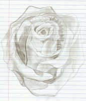 Rose by Livia-Of-Rome