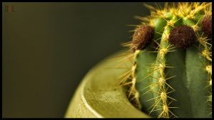 Also a cactus by HzlCan